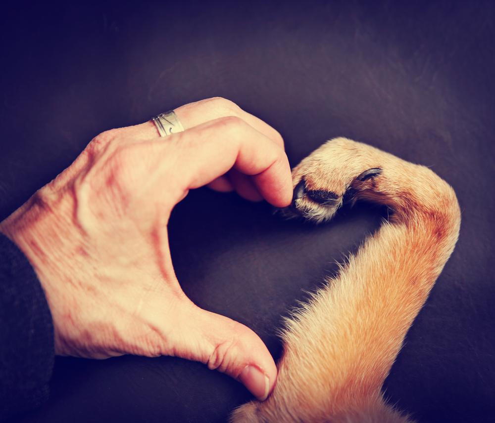 مربى الحيوانات الأليفة