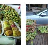 دروس كثيرة في التجارة من بائع التين الشوكي! (الجزء الثاني)